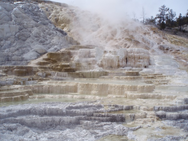 Mammoth hotsprings | Yellowstone National Park