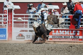 Stampede Rodeo show - Calgary