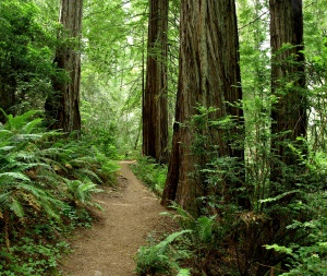 Jedediah Smith Redwoods State Park | Crescent City