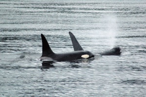 Orca's | Vancouver Island